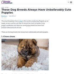 These Dog Breeds Always Have Unbelievably Cute Puppies