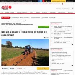 Breizh-Bocage : le maillage de haies se reconstruit