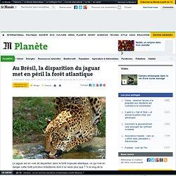Au Brésil, la disparition du jaguar met en péril la forêt atlantique
