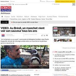 Au Brésil, un manchot vient voir son sauveur tous les ans
