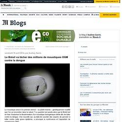 BLOG ECOLOGIE LE MONDE 18/04/14 Le Brésil va lâcher des millions de moustiques OGM contre la dengue