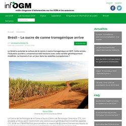 INFOGM 09/03/18 Brésil – Le sucre de canne transgénique arrive