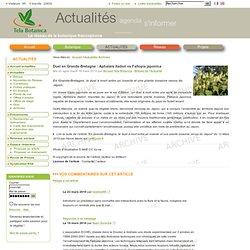 Duel en Grande-Bretagne: Aphalara itadori vs Fallopia japonica