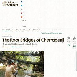 Item 4 - The Root Bridges of Cherrapunji