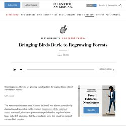 Bringing Birds Back to Regrowing Forests: Scientific American Podcast
