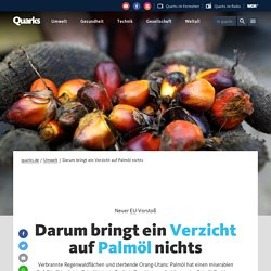 Darum bringt ein Verzicht auf Palmöl nichts - quarks.de