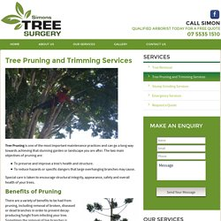 Tree Cutting & Trimming Services