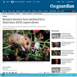 Britain's dormice have declined by a third since 2000, report shows