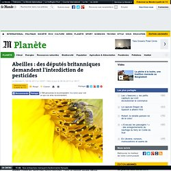 Abeilles : des députés britanniques demandent l'interdiction de pesticides