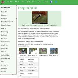 British Garden Birds - Long-tailed Tit