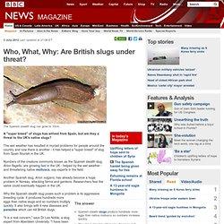 Who What Why: Are British slugs under threat?