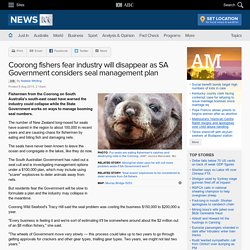 Coorong fishers fear industry will disappear as SA Government considers seal management plan