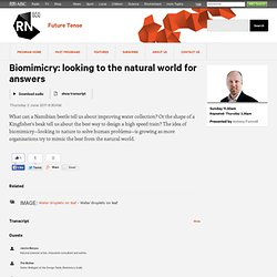Biomimicry: looking to the natural world for answers - RN Future Tense - 2 June 2011