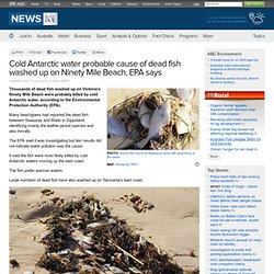 Cold Antarctic water probable cause of dead fish washed up on Ninety Mile Beach, EPA says