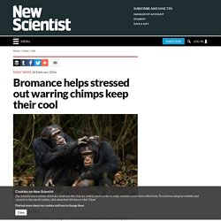 Bromance helps stressed out warring chimps keep their cool