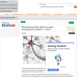 Bromodeoxyuridine (BrdU) in adult neurogenesis research - Part 1