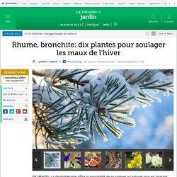 Rhume, bronchite: dix plantes pour soulager les maux de l'hiver