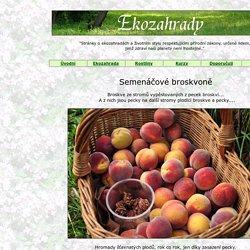 Semenáčové broskvoně - broskve ze stromů ze semen z broskví...