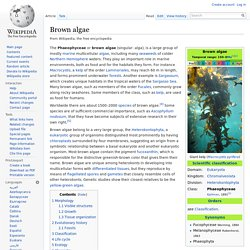 WIKIPEDIA - Brown algae.