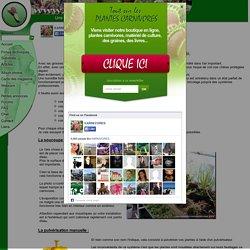Brumisateurs humidificateurs d'air à ultrasons - www.plantes-carnivores.com