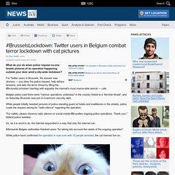 #BrusselsLockdown: Twitter users in Belgium combat terror lockdown with cat pictures