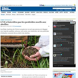 Sommet de Bruxelles: L'UE n'interdira pas les pesticides nocifs aux abeilles - News Monde: Europe