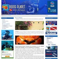 Buceo en Cartagena