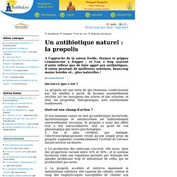 Un antibiotique naturel : la propolis