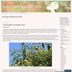 Butterflies and Gardens