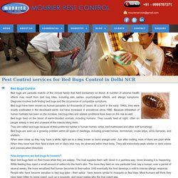 Bed Bugs Pest Control Services in India