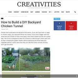 How to Build a DIY Backyard Chicken Tunnel -