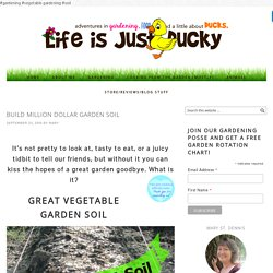 Build Million Dollar Garden Soil - Life Is Just Ducky