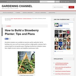 How to Build a Strawberry Planter: Tips and Plans
