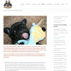 How to Choose a French Bulldog Breeder