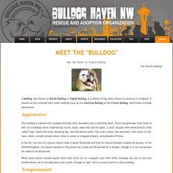 BHNW - Bulldog Haven NW - English & French Bulldog Rescue