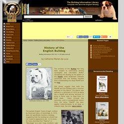 Bulldog history (Origin of the English bulldog)