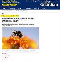 Bumblebees decline to mass extinction