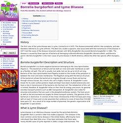 Borrelia burgdorferi and Lyme Disease - MicrobeWiki