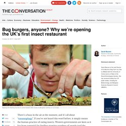 Bug burgers, anyone? Why we're opening the UK's first insect restaurant
