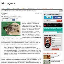 On Burning Sea Turtles Alive