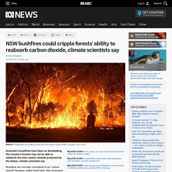 NSW bushfires could cripple forests' ability to reabsorb carbon dioxide, climate scientists say