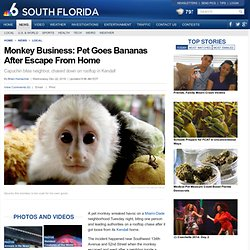 Monkey Business: Pet Goes Bananas After Escape From Home