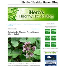 Butterbur for Migraine Prevention and Allergy Relief « The Healthy Haven