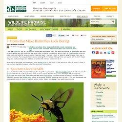 7 Moths that Make Butterflies Look Boring
