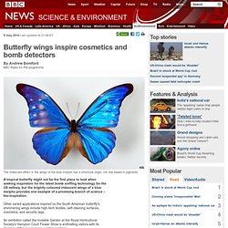 Butterfly wings inspire cosmetics and bomb detectors