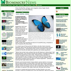 How butterfly wings can inspire new high-tech surfaces (11/10/2012)