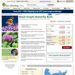 Butterfly Bush 'Lochinch' for Sale
