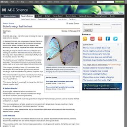 Butterfly wings feel the heat & News in Science (ABC Science)