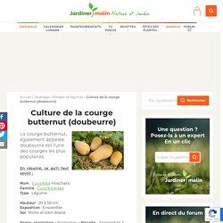 Butternut : semis, culture et récolte de la courge butternut