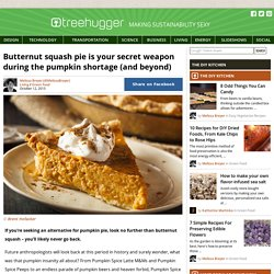 Butternut squash pie is your secret weapon during the pumpkin shortage (and beyond)